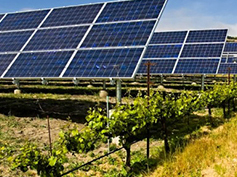 Agricultural Solar Panels by Soventix